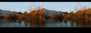 Exploring Stereo 3D Cinematography: Mise en Scene and Cinema Verite